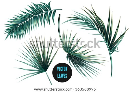 Vector tropical palm leaves, jungle leaves set isolated on white background - stock vector