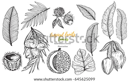 Vector tropical set with tropical leaf, banana, coconut, pineapple,mango, melon, lychee. Hand drawn tropical vector illustration.Tropical fruits.Stock vector.