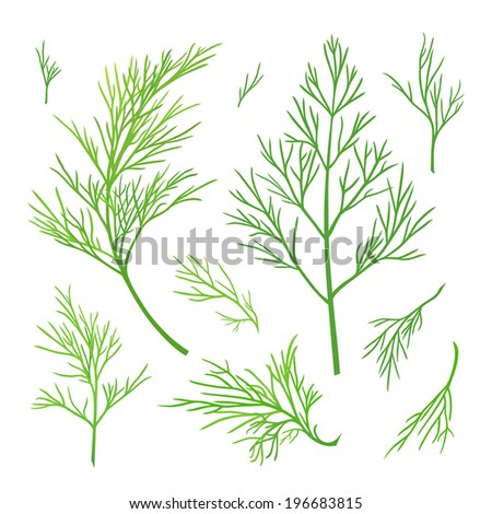 Vector twigs of dill - stock vector