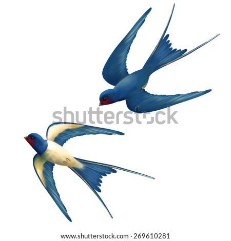 Vector two flying swallows on white background - stock vector