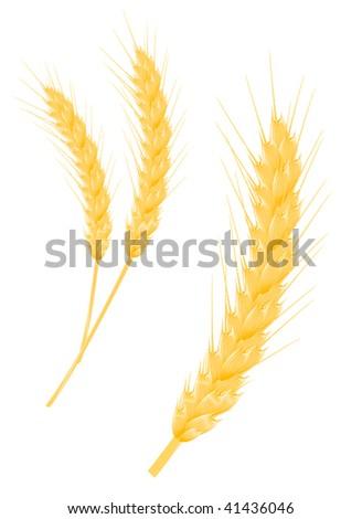 Vector version. Ripe wheat ear as a agriculture concept - stock vector