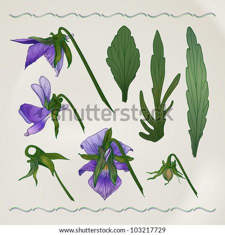 Vector vintage botanical illustration depicting the viola tricolor - stock vector