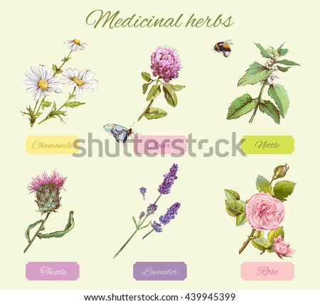 Vector vintage set of wild flowers and medicinal herbs. Design for cosmetics, herbal tea, homeopathy, beauty salon, natural and organic, health care products. Can be used as boho style elements.