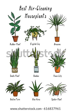 vector visual guide of best air cleaning indoor plants hand drawn houseplants that filter