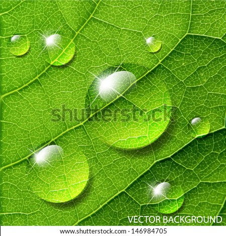 Vector water drops on green leaf macro - stock vector