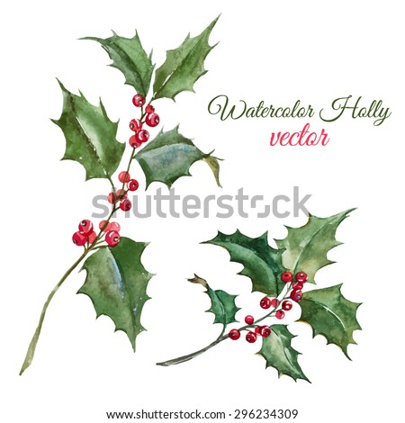 holly leaves with berries stock images royaltyfree