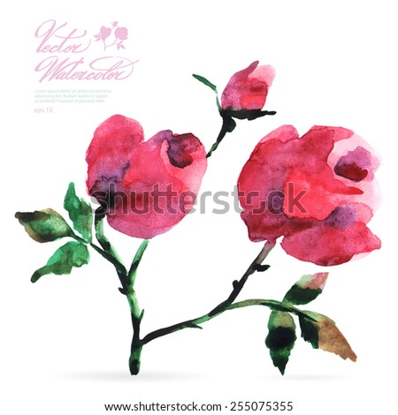Vector watercolor flower on white backdrop. Isolated beautiful pink rose and bud. - stock vector
