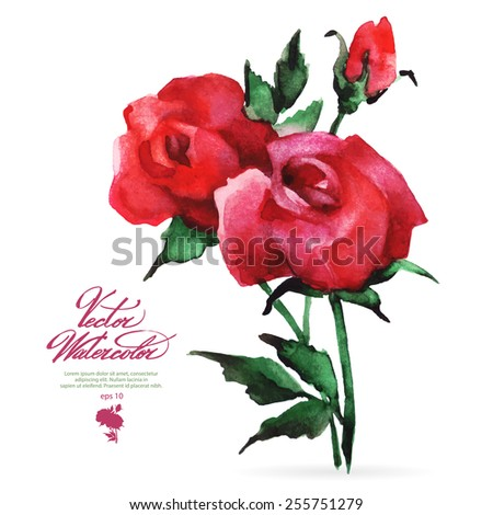 Vector watercolor flower on white backdrop. Isolated beautiful pink roses. - stock vector