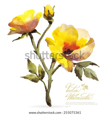 Vector watercolor flower on white backdrop. Isolated beautiful yellow rose and bud. - stock vector