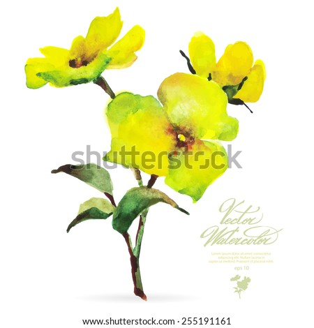 Vector watercolor flower on white backdrop. Isolated beautiful yellow spring flower. - stock vector