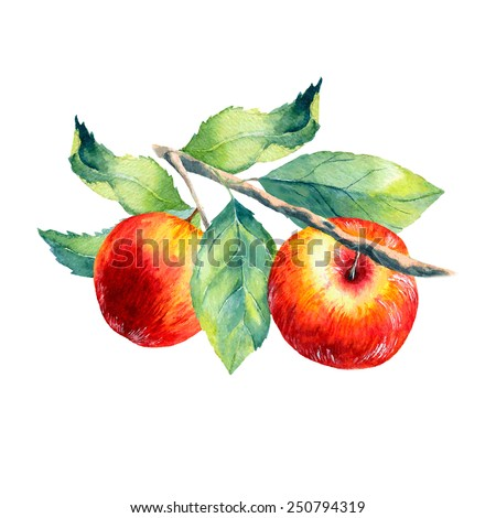 vector watercolor fruit apple branch on white background - stock vector