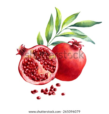 vector watercolor fruit pomegranate on white background - stock vector