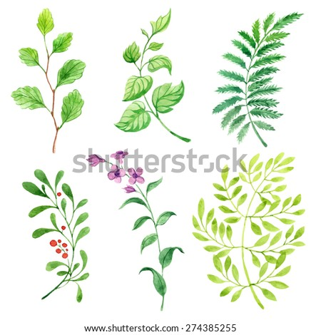 vector watercolor leaves set - stock vector