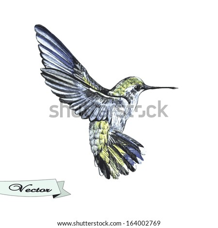 Vector watercolor sketch of a hummingbird. Vector illustration for greeting cards, invitations, and other printing and web projects. - stock vector