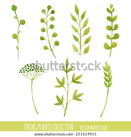 Vector watercolor spring plants collection. Floral design elements. Isolated. - stock vector