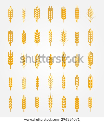 Vector wheat ears icons set. Ear and organic wheat, bread agriculture, seed and plant, natural eat - stock vector