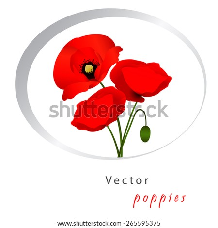 Vector white background with red flowers poppies - stock vector