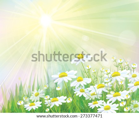 Vector  white chamomiles flowers on sunny  background. - stock vector