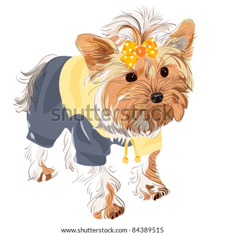vector Yorkshire terrier red color with a yellow bow in a yellow jacket and black pants - stock vector