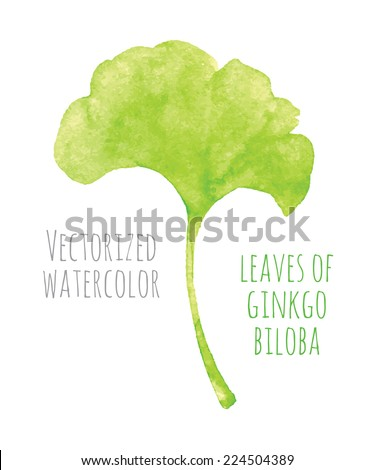Vectorized watercolor hand drawing - leaf of Ginkgo biloba - stock vector
