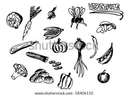 vegetable - stock vector