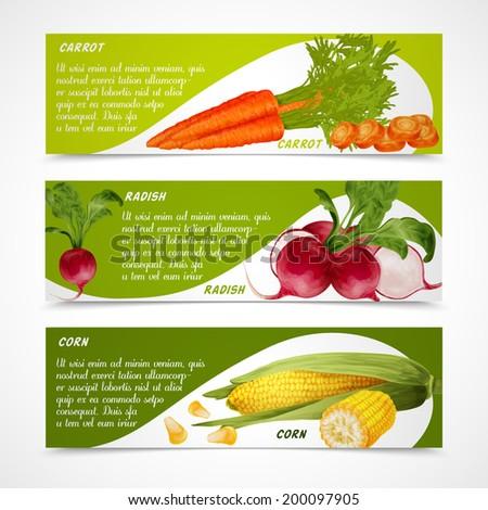 Vegetable organic food realistic carrot radish and corn horizontal banners set isolated vector illustration - stock vector