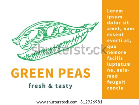 Vegetable poster, flyer or template with green peas  and text, in etching vintage sketch hand drawn style, for healthy vegetarian food advertising design. Vector - stock vector
