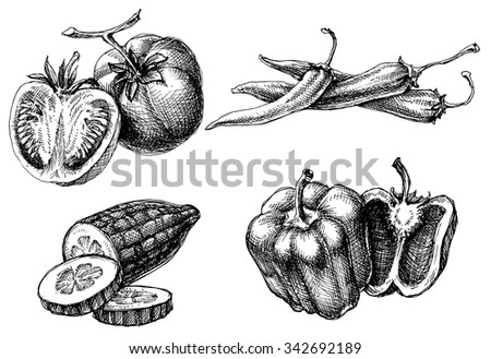 Vegetables isolated set, etch style - stock vector