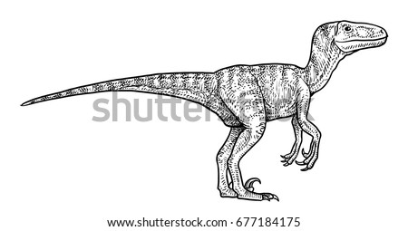 velociraptor stock images royalty free images vectors