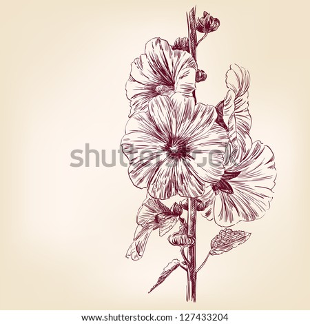 Verbascum Flowers  vintage drawing vector illustration  isolated