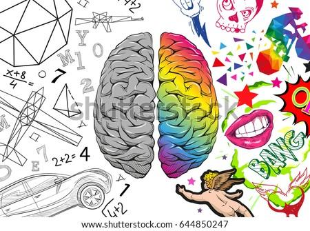Versus Human Brain Right Left Hemisphere Stock Vector ...