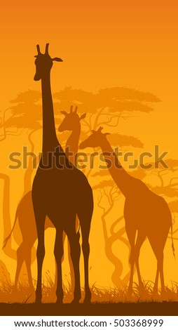Vertical vector illustration of wild giraffes in African savanna with trees.