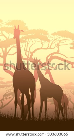 Vertical vector illustration of wild giraffes in African sunset savanna with trees. - stock vector