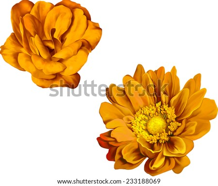 very beautiful bright orange flower, Yellow rose flower isolated on white background. - stock vector