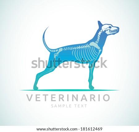Veterinario - Veterinarian spanish text - Veterinary care - dog care - stock vector