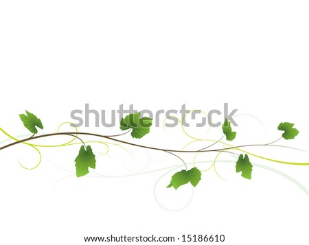 Vine floral background - stock vector