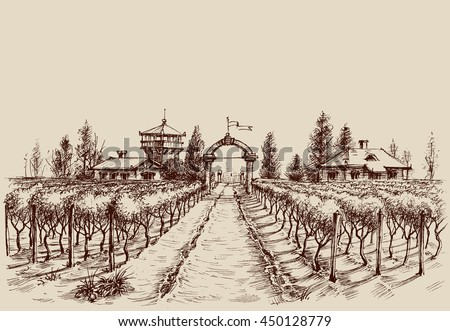 Vineyard vector drawing, etch style. Farm entrance and vine culture - stock vector