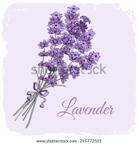 Vintage background with hand drawn floral elements in engraving style - fragrant lavender bouquet. Vector illustration. - stock vector