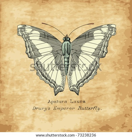 Vintage Butterfly - stock vector