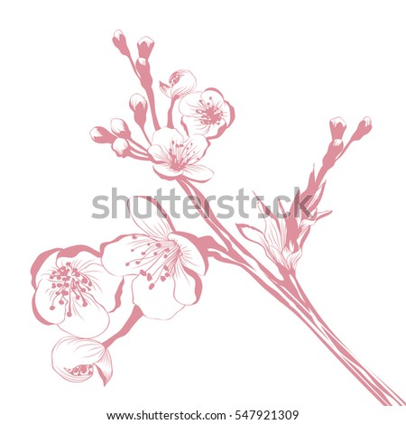 Vintage Cherry Blossom Branch Over White Background
