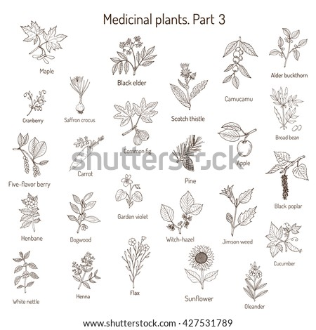 Vintage collection of hand drawn medical herbs and plants. Botanical set, vector illustration. - stock vector