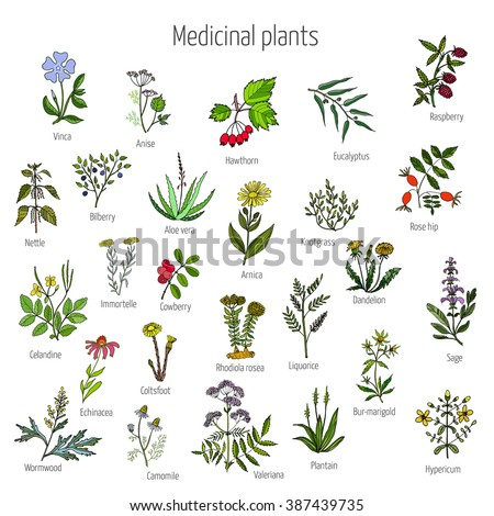 how to make medicine from plants and herbs