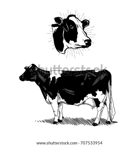 Vintage Drawing Dairy Farm And Cow Illustration