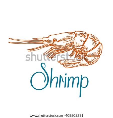 Vintage engraving sketch icon of marine rock shrimp or prawn with short antennae and caption Shrimp. Underwater wildlife, seafood menu, old fashioned recipe book design usage - stock vector