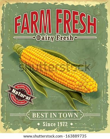 Vintage Farm fresh Corncob poster design - stock vector