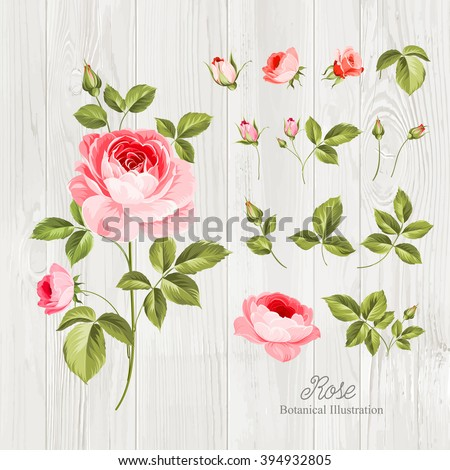 Vintage flowers set over wooden desk. Wedding flowers bundle. Flower collection of watercolor detailed hand drawn roses. Vector illustration.