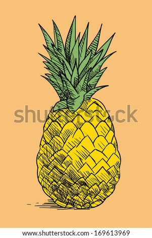vintage hand drawn pieapple, tropical fruit - stock vector