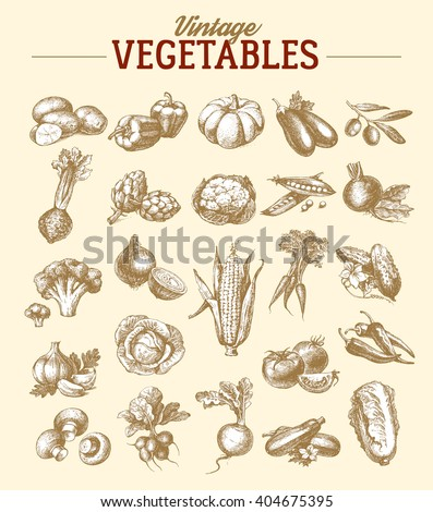 Vintage hand drawn sketch vegetable set. Eco foods.Vector illustration - stock vector