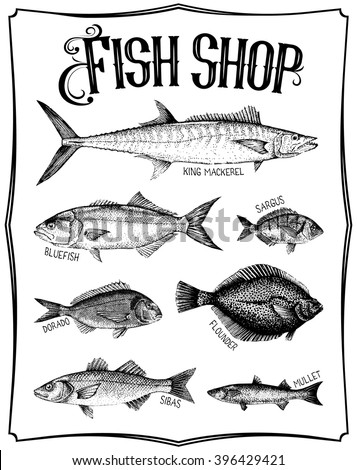 Vintage hand drawn vector poster with different type of fishes. Fish shop - stock vector