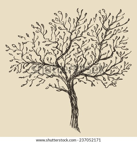 Vintage olive engraved background. Hand drawn illustration - stock vector